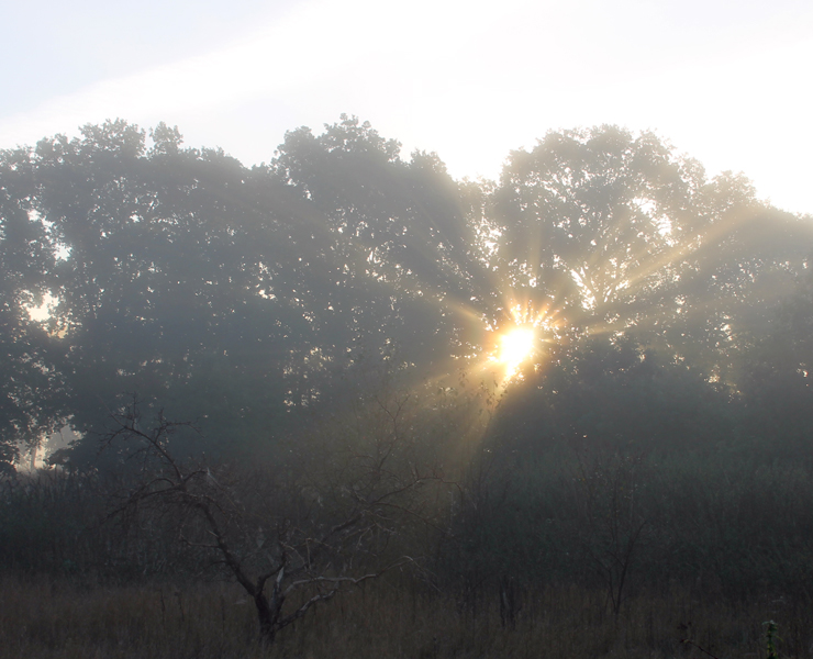 Sonnenaufgang im Herbstnebel